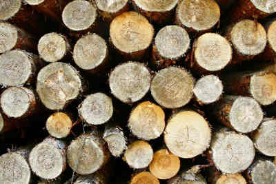 bois traiter
