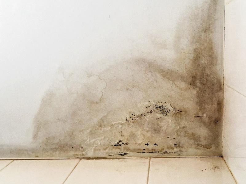 taches d humidit sur les murs gallery of bricoler avec roger rsoudre des problmes duhumidit. Black Bedroom Furniture Sets. Home Design Ideas